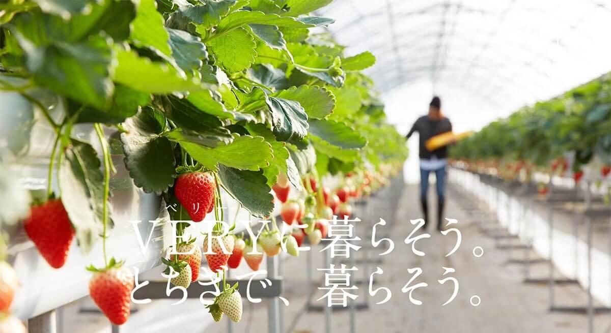 栃木県「ベリーマッチとちぎ」